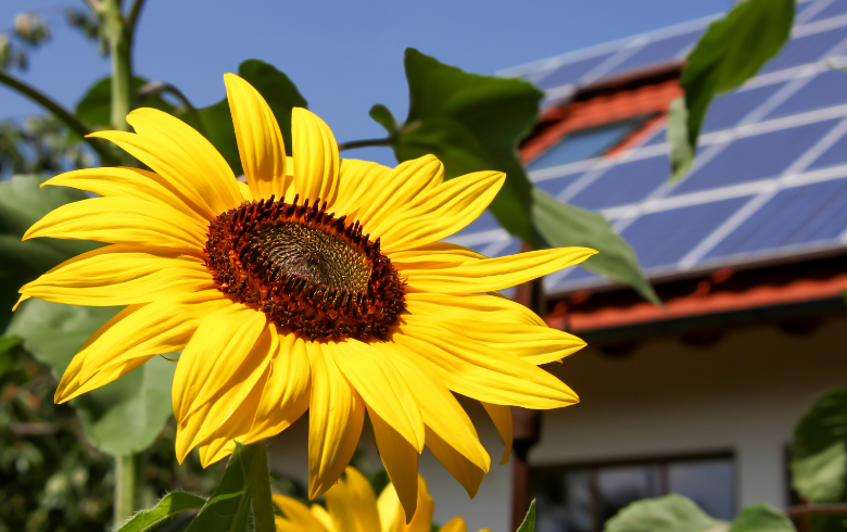 Go Solar Update blog image. Image features a big, yellow sunflower in the foreground and a roof with solar panels and skylight in the background.